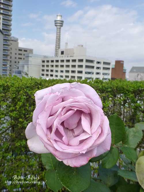 横浜西洋館めぐりハロウィンーその2_d0128697_15162933.jpg
