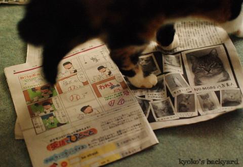 京都からの素敵な小包♪_b0253205_05201851.jpg
