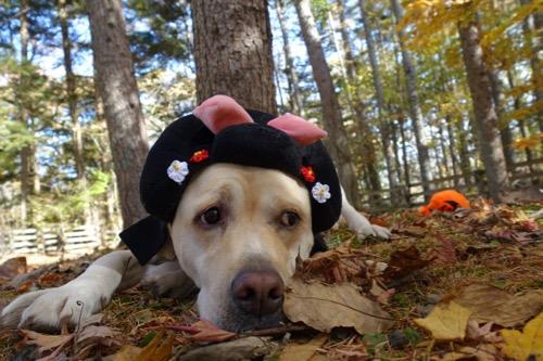 Happy Halloween_e0192217_21464058.jpg
