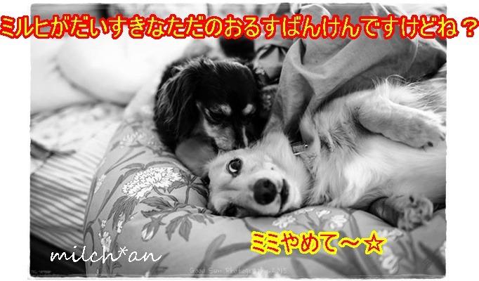 b0115642_2343347.jpg