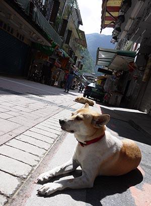 台湾旅行2・四日目_f0152544_11395028.jpg