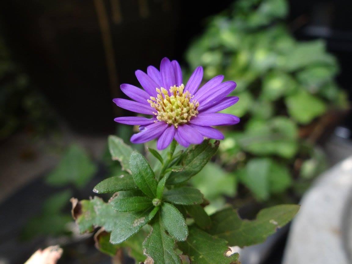 野に咲く花_e0240147_19544339.jpg