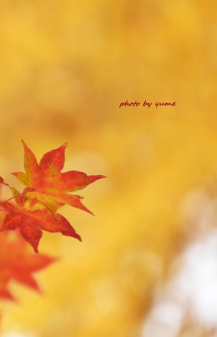 Yellow&orange_a0322950_7325144.jpg