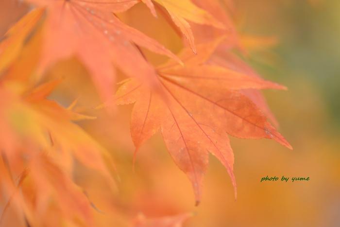 Yellow&orange_a0322950_732595.jpg