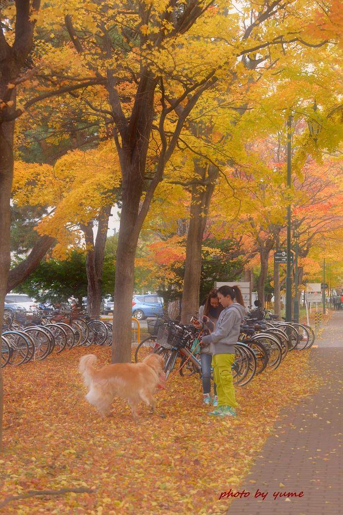 Yellow&orange_a0322950_7333995.jpg