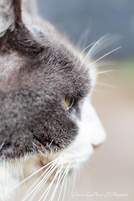 猫のいる風景 近所の灰白ちゃん_b0133053_095793.jpg