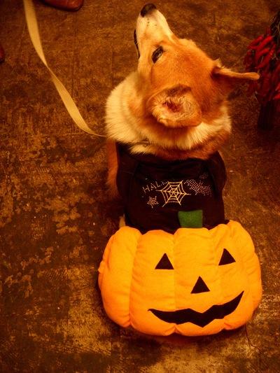 Happy Halloween!_a0229658_12433273.jpg