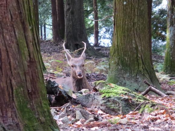 散歩歩けば鹿に当たる。_c0001670_17510016.jpg