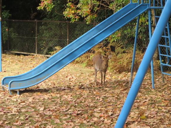散歩歩けば鹿に当たる。_c0001670_17552355.jpg
