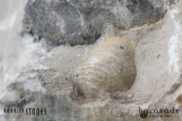 アンモナイト化石(ドイツ産)_d0303974_10333994.jpg