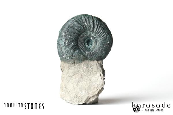 アンモナイト化石(ドイツ産)_d0303974_10344436.jpg