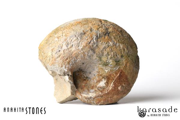 アンモナイト化石(ドイツ産)_d0303974_10412333.jpg