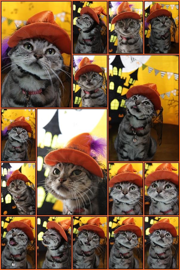 ハッピー ハロウィーン!! 2015_d0058182_1632357.jpg