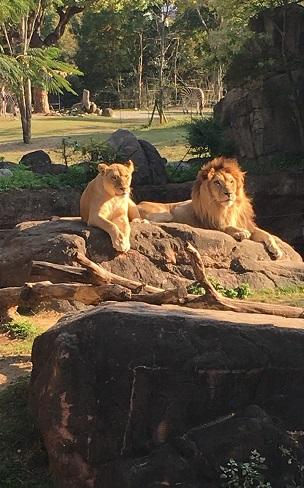 動物園_f0202682_10265984.jpg