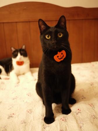 ハロウィンパンプキンキャット猫 ぎゃぉすみるきぃ編。_a0143140_0164652.jpg