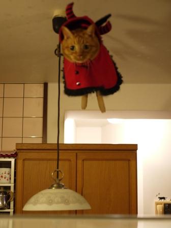 空飛ぶハロウィン猫 しぇる編。_a0143140_0585939.jpg