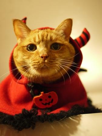 ハロウィンパンプキンキャット猫 しぇる編。_a0143140_1142093.jpg