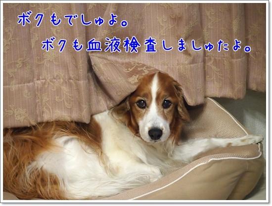 d0013149_00112637.jpg