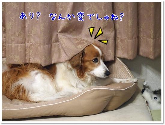 d0013149_00115697.jpg
