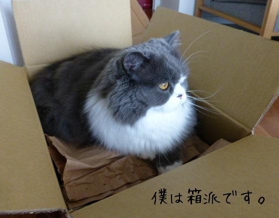 今週の箱ネコ_e0237625_18573075.jpg