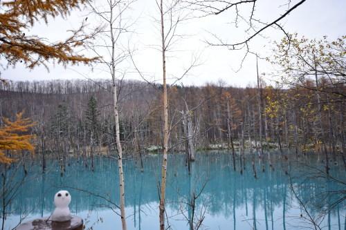 初冬の青い池_d0285540_21141301.jpg