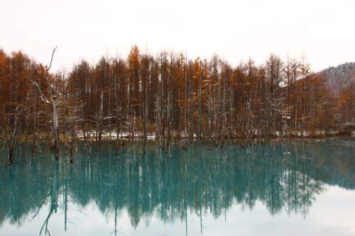 初冬の青い池_d0285540_21151595.jpg