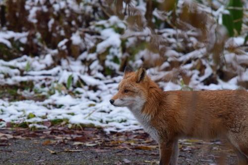 初冬の青い池_d0285540_21275413.jpg