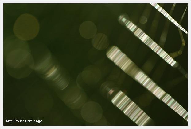 b0260373_23120103.jpg