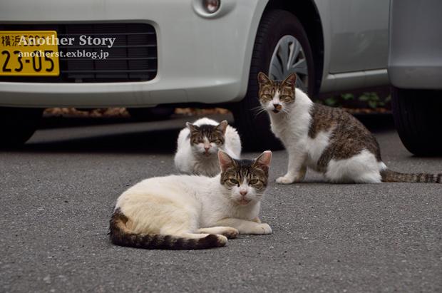 stray cats_a0238574_21235211.jpg