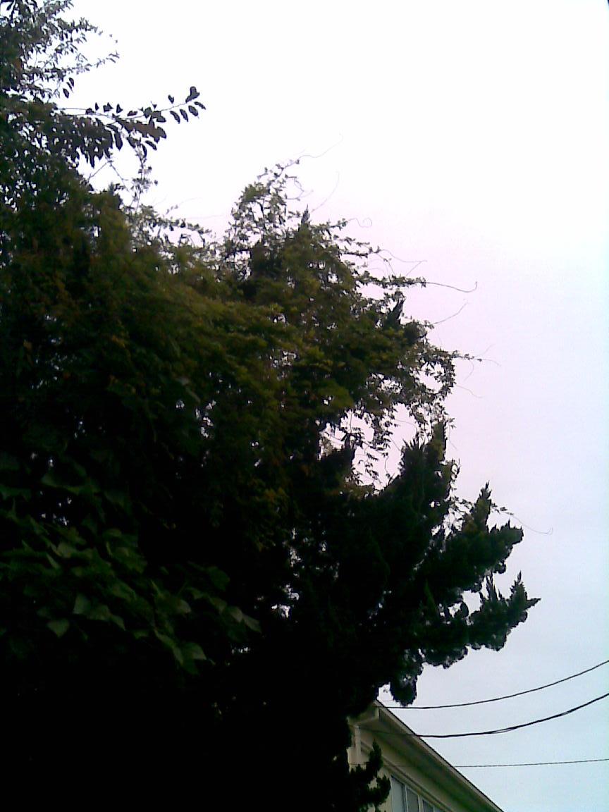 冷たい雨は物悲しくなる_d0061678_20285039.jpg