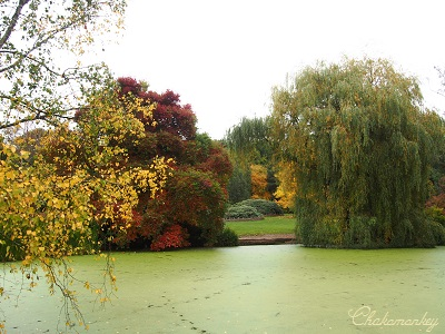 Richmond Parkの黄葉_f0238789_22111791.jpg