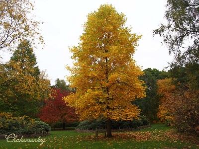 Richmond Parkの黄葉_f0238789_2212198.jpg