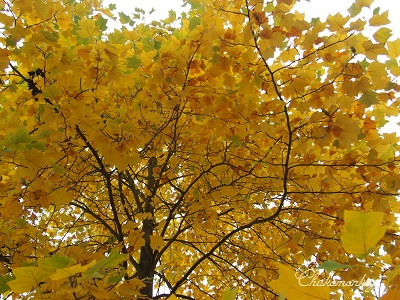 Richmond Parkの黄葉_f0238789_22141233.jpg