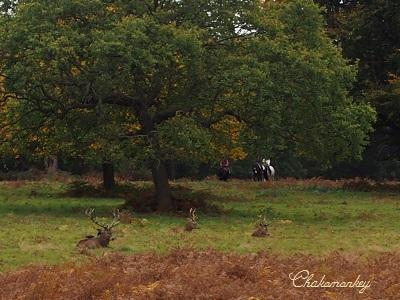 Richmond Parkの黄葉_f0238789_22162963.jpg