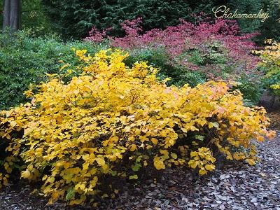 Richmond Parkの黄葉_f0238789_229265.jpg