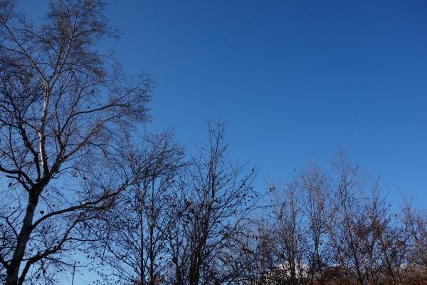 おはよう、浅間山!_b0174425_08052797.jpg