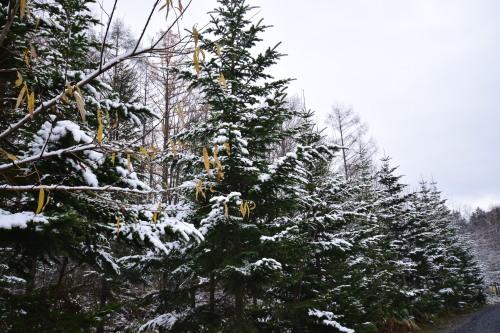 初冬の青い池_d0285540_07030220.jpg