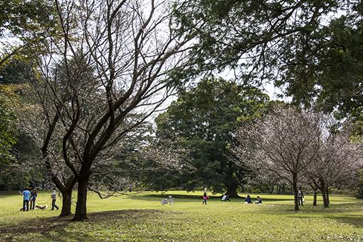 十月桜_f0143469_1541719.jpg