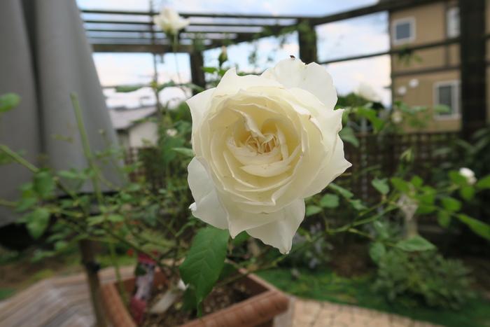 f0201170_9232983.jpg