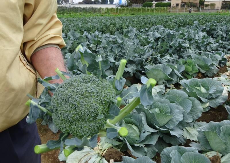 「都市農業の日」に農業者との意見交換会_f0059673_06130022.jpg