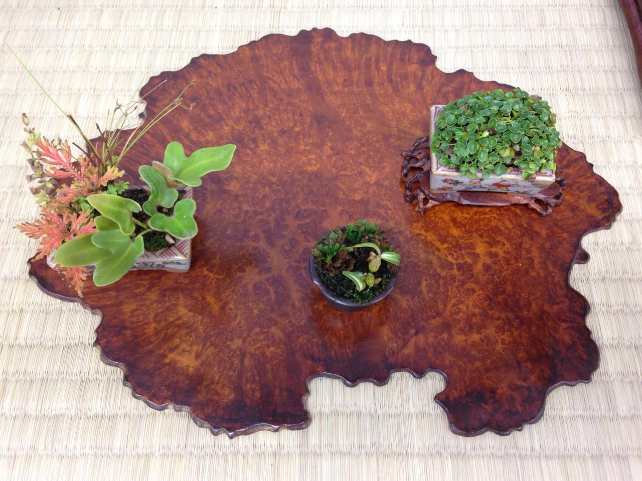 「橋本さんの盆栽」_a0075684_046382.jpg