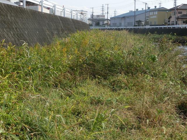 秋の日差しの中、小潤井川の草刈りと「ホルモンちゅうちゃん」での払い_f0141310_7231015.jpg