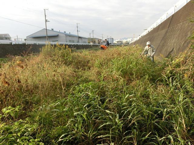 秋の日差しの中、小潤井川の草刈りと「ホルモンちゅうちゃん」での払い_f0141310_7245389.jpg