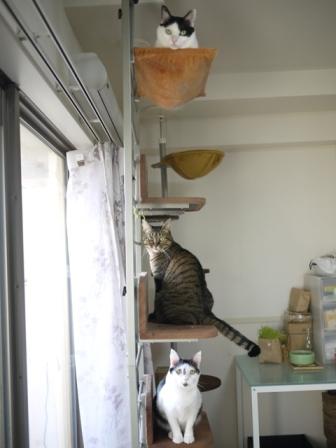 猫のお留守番 八朔くん柚子ちゃん小夏くん編。_a0143140_21132272.jpg