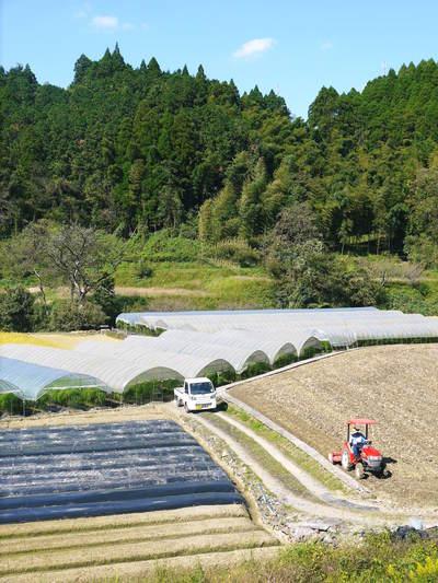 アスパラ 「なごみの里の朝採り『グリーンアスパラ』」 来年の収穫へ向け、秋の様子を現地取材_a0254656_17432830.jpg