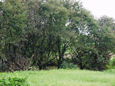 アスパラ 「なごみの里の朝採り『グリーンアスパラ』」 来年の収穫へ向け、秋の様子を現地取材_a0254656_181554.jpg