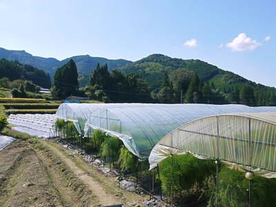 アスパラ 「なごみの里の朝採り『グリーンアスパラ』」 来年の収穫へ向け、秋の様子を現地取材_a0254656_18274210.jpg