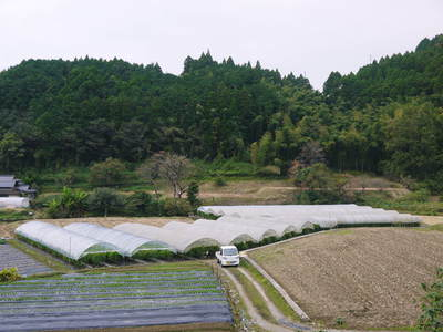 アスパラ 「なごみの里の朝採り『グリーンアスパラ』」 来年の収穫へ向け、秋の様子を現地取材_a0254656_1852348.jpg