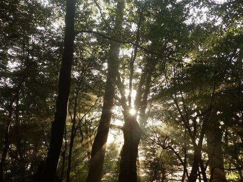 光の森を歩く_b0160957_12192119.jpg