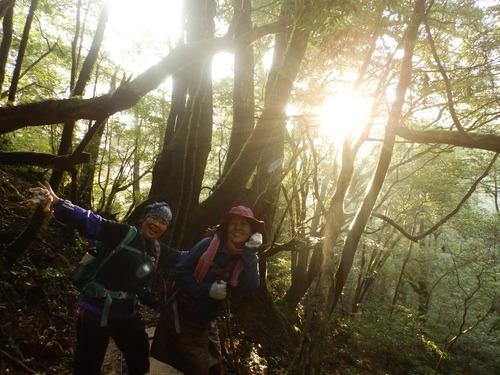 光の森を歩く_b0160957_12202415.jpg